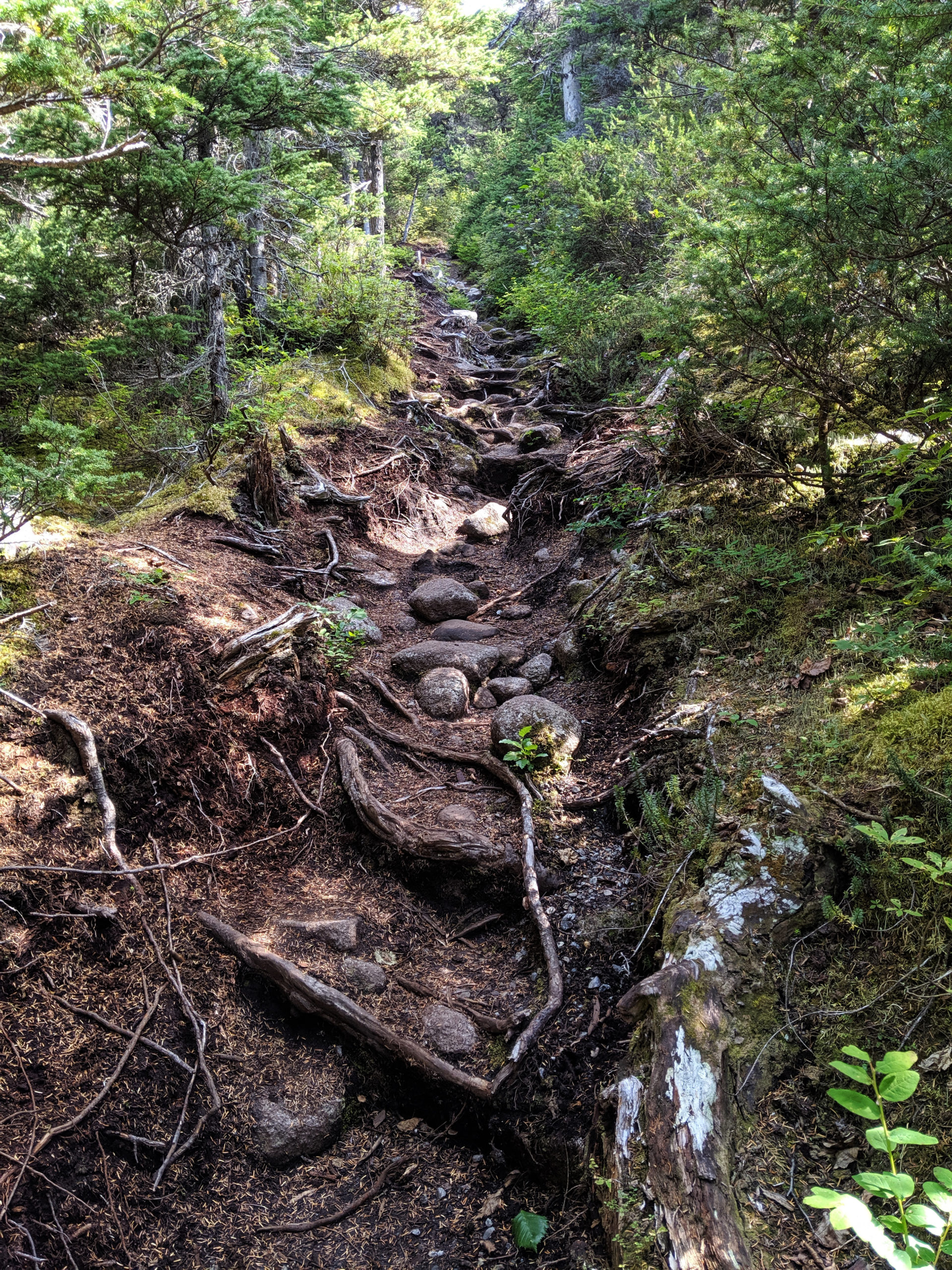 Part of the Dewey Lakes Trail System in Skagway, Alaska, pictured on Aug. 18, 2019. (Steve Silva)